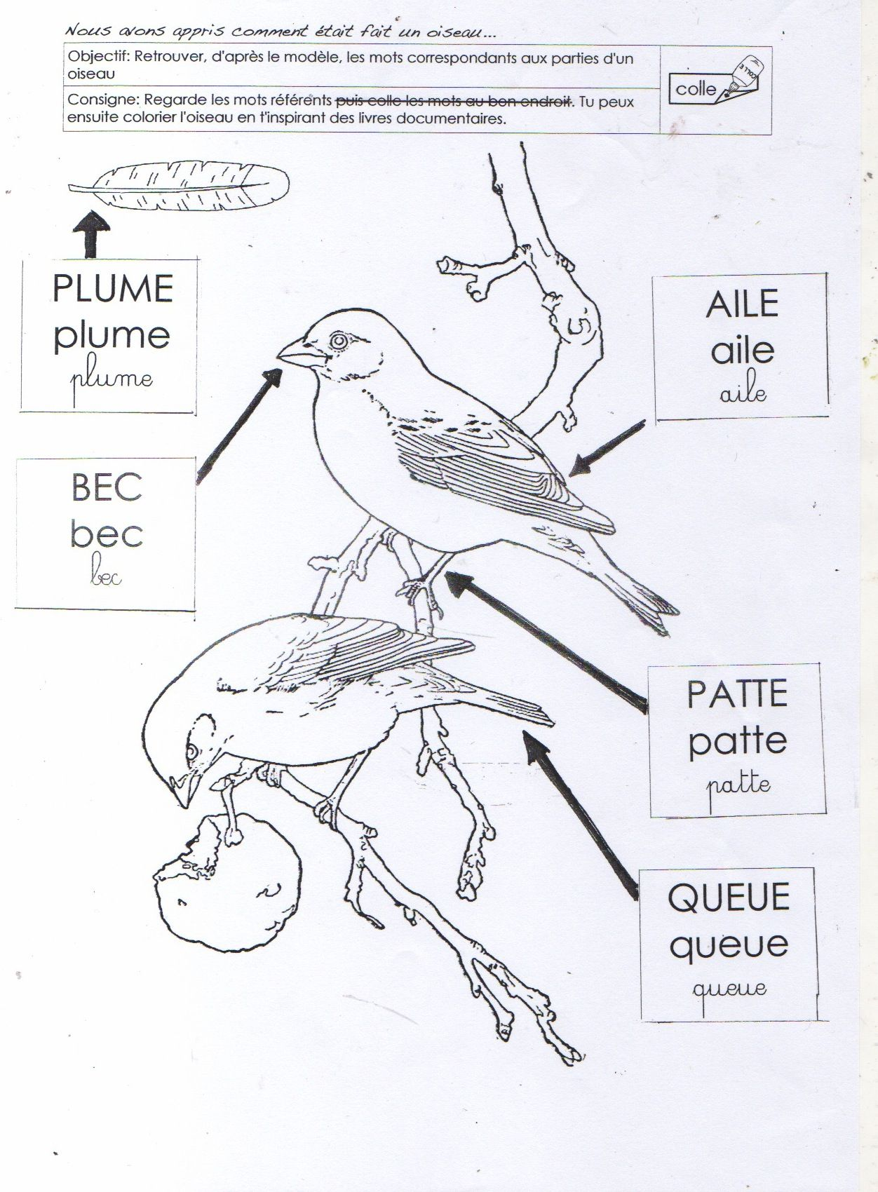 Le Vocabulaire De L Oiseau Ms