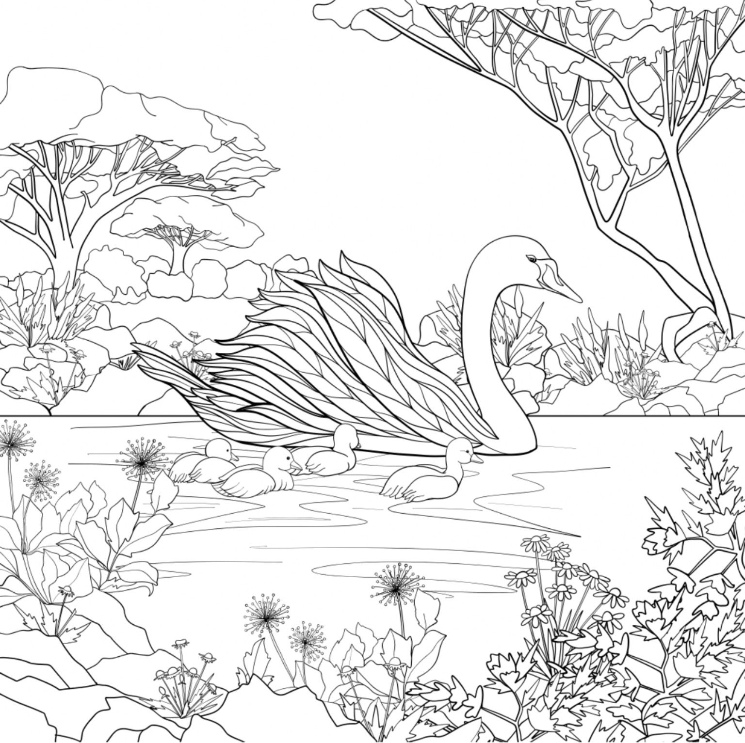 Swan Adult Coloring Page