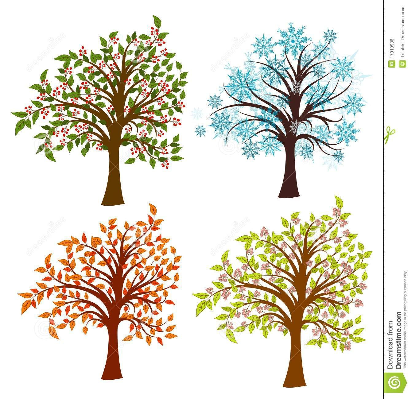 Changing Seasons Stages Of Tree Life