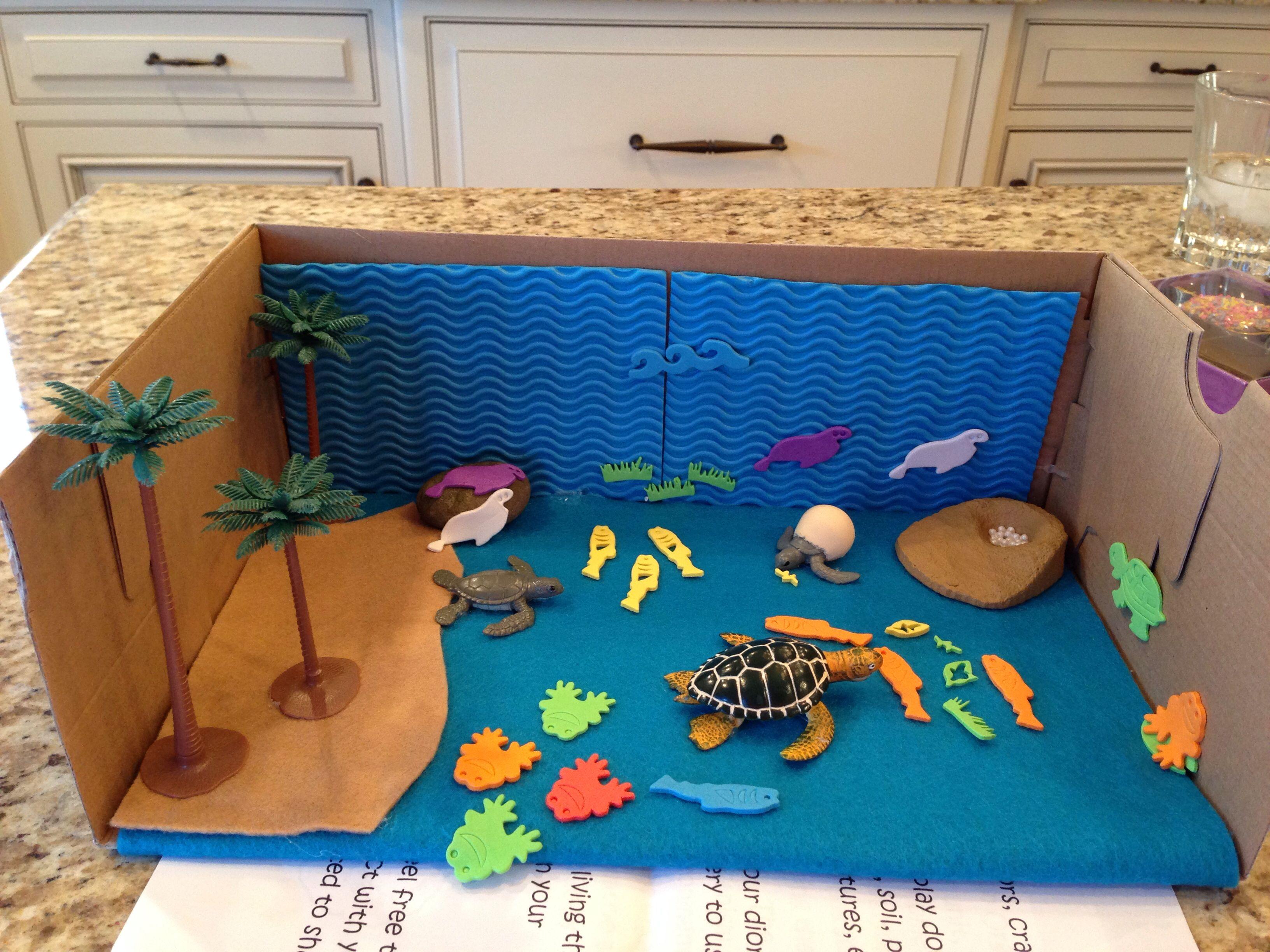 Our Sea Turtle Diorama