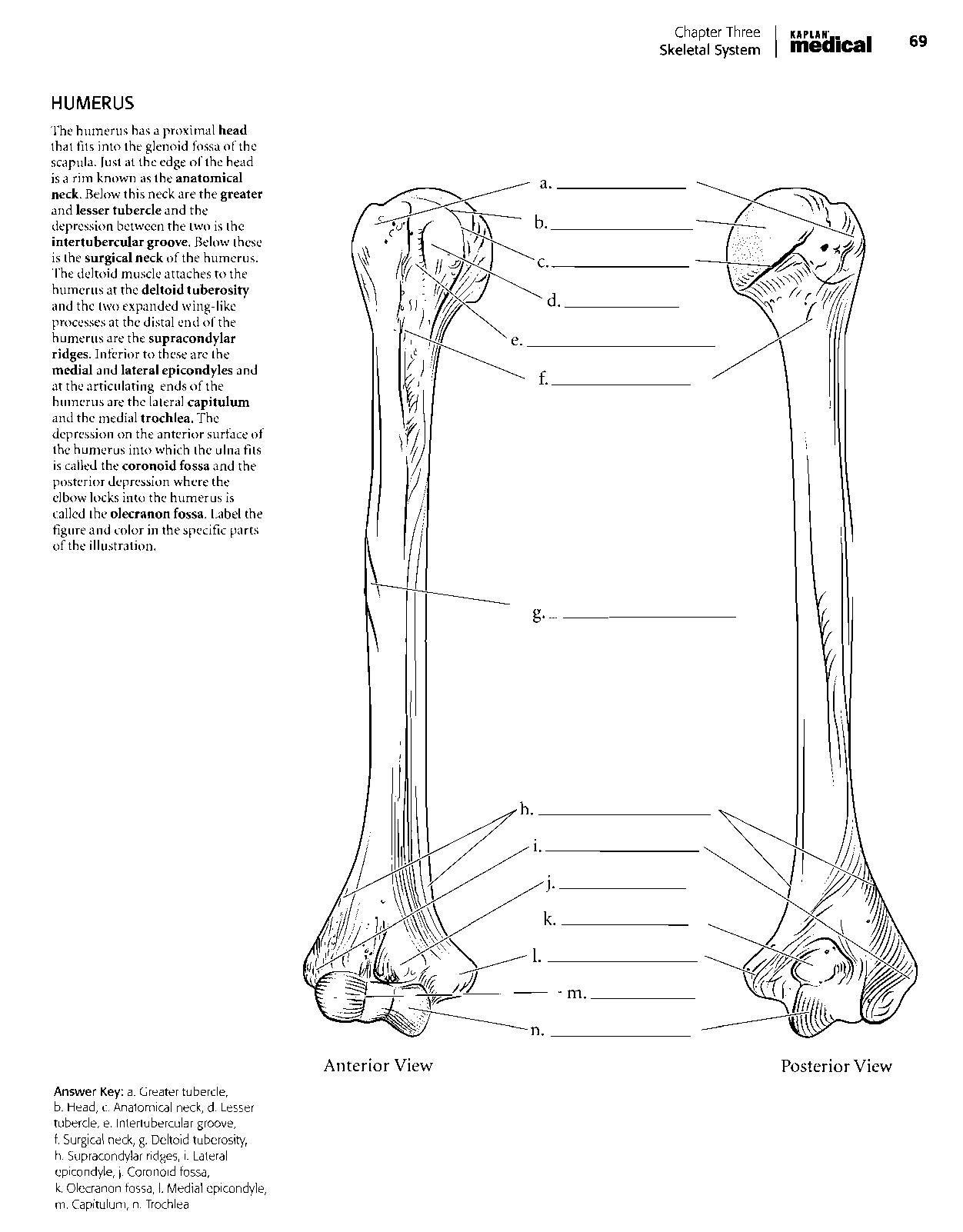 Bone Quiz