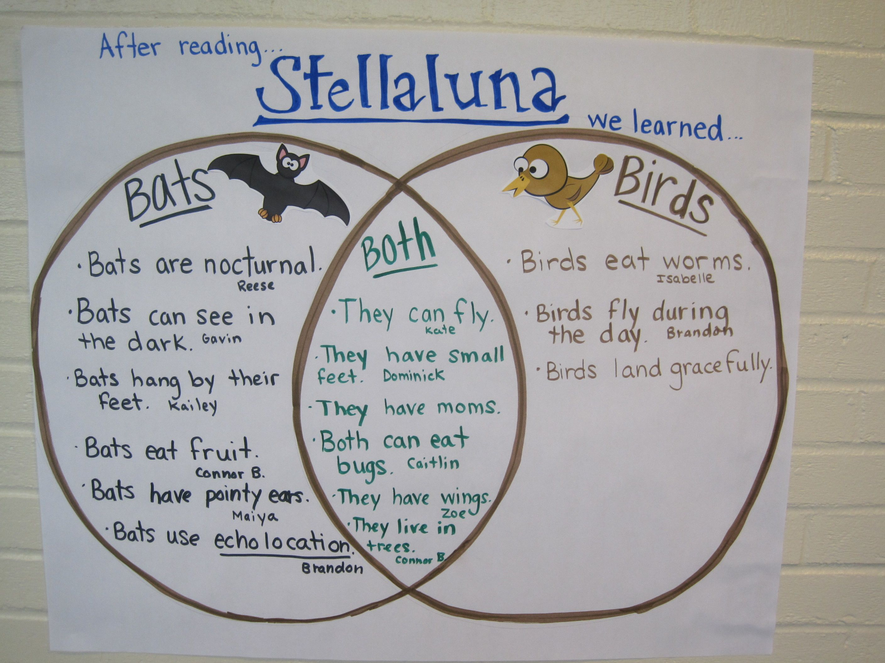 Higher Order Thinking Done After Reading Stellaluna