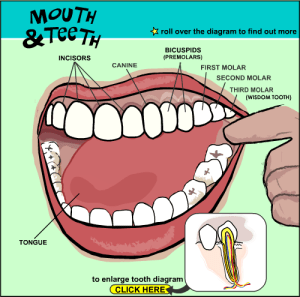 Mouth and Teeth Interactive tools help parents and