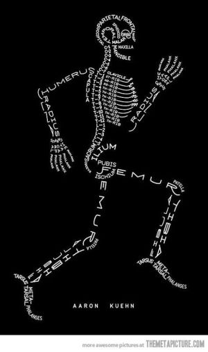 Fun graphic to help learn the parts of the skeletal system | Science for Secondary Grades