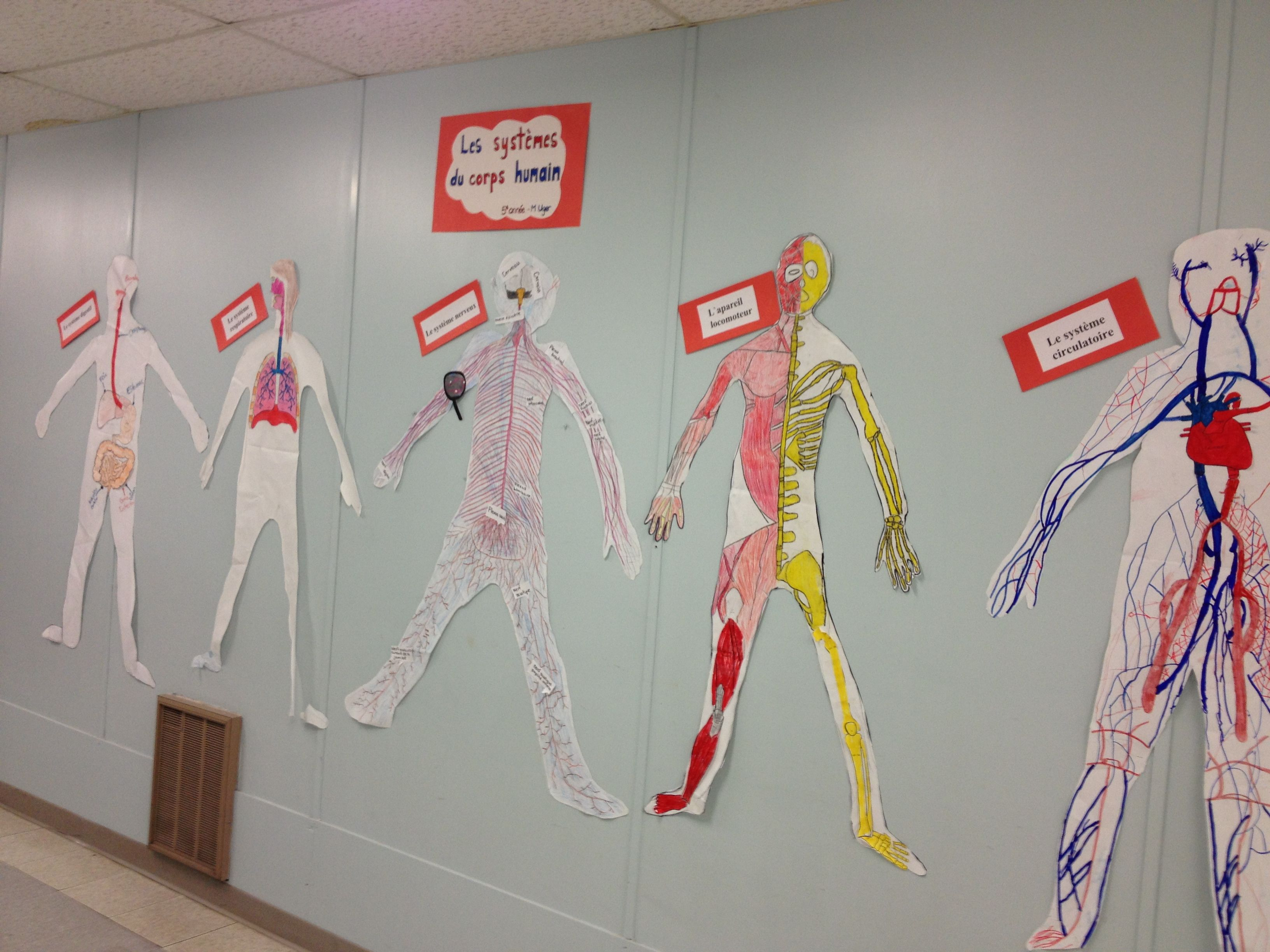 Human Body Systems Project For Grade 5 Have Students