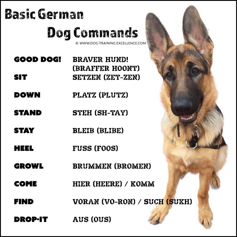 21 german dog commands to train your dog german shepherd