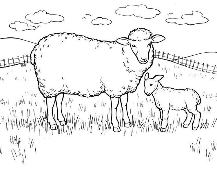 sheep and her son in finding eating  sheep  pinterest
