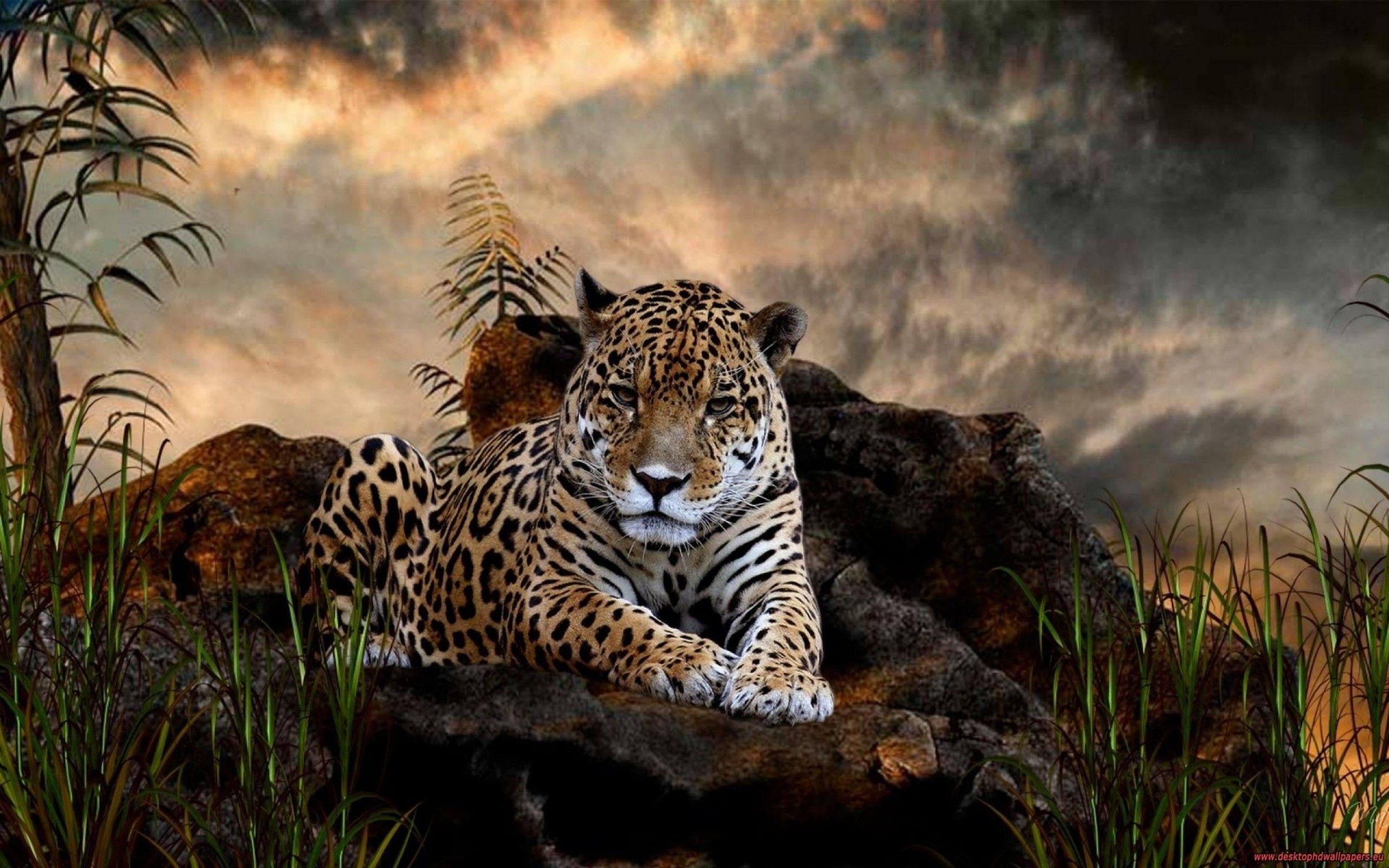 wild animals hd desktop wallpapers | places to visit | pinterest