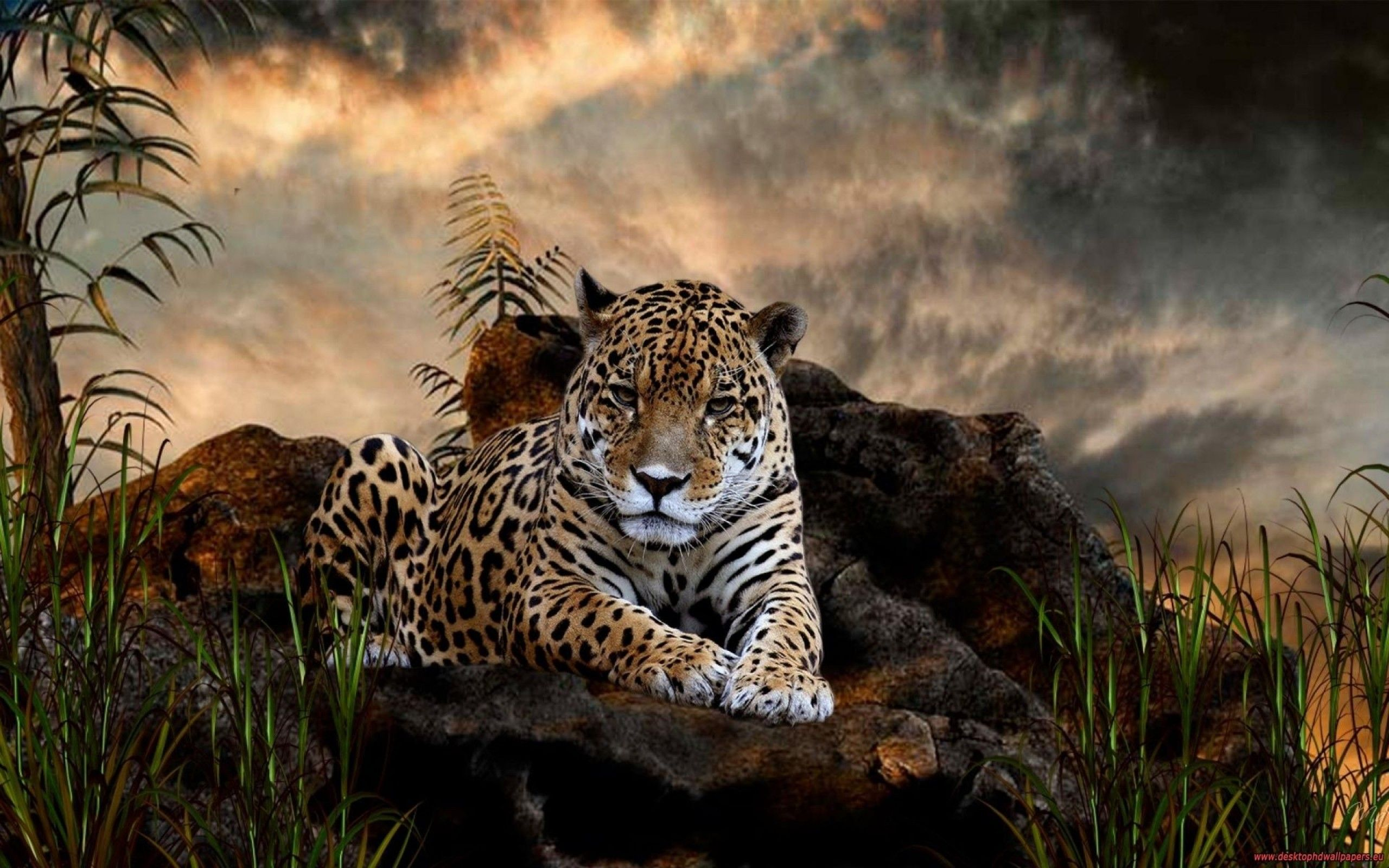 wild animals hd desktop wallpapers | places to visit | pinterest