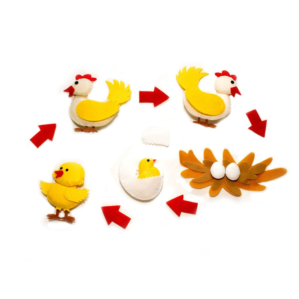 Chicken Life Cycle Character Set