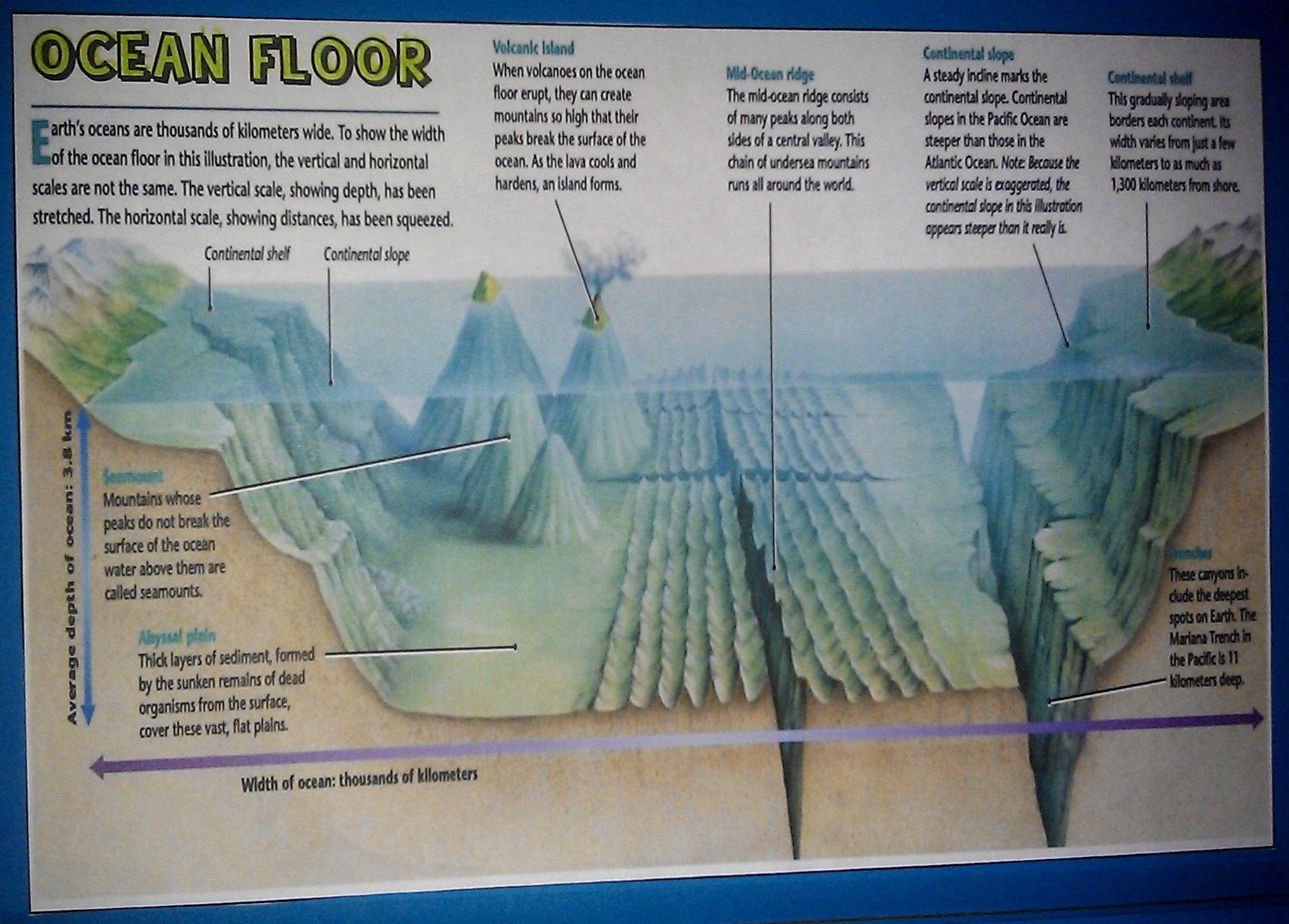 Features Of The Ocean Floor Worksheet Free Worksheets Library