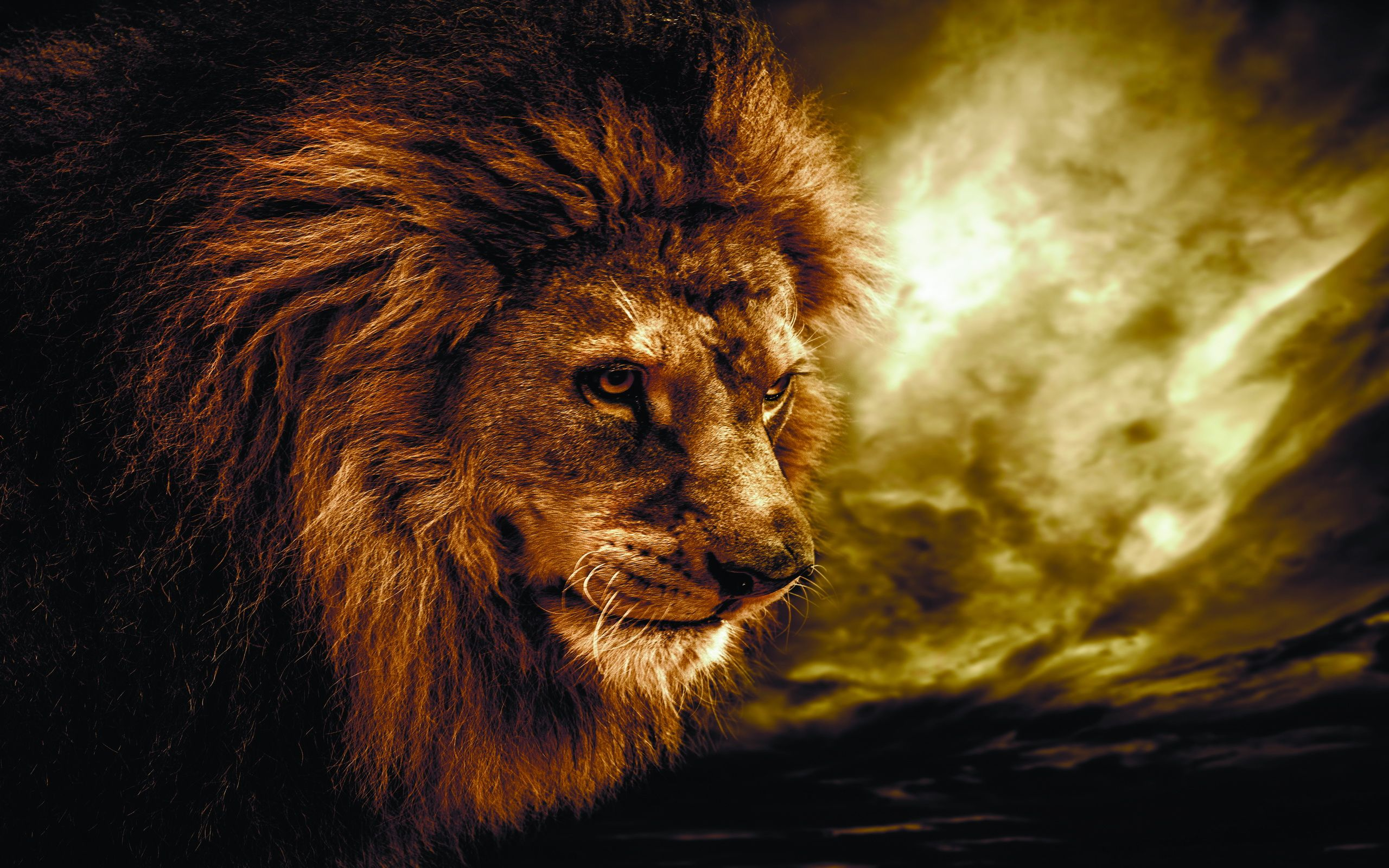 lion hd wallpapers download | hd wallpapers | pinterest | lion