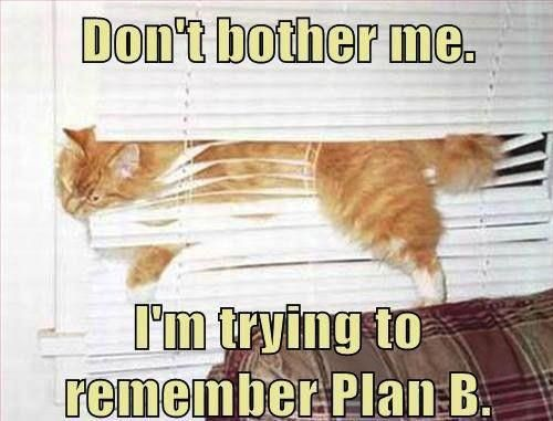 Image result for cat plan