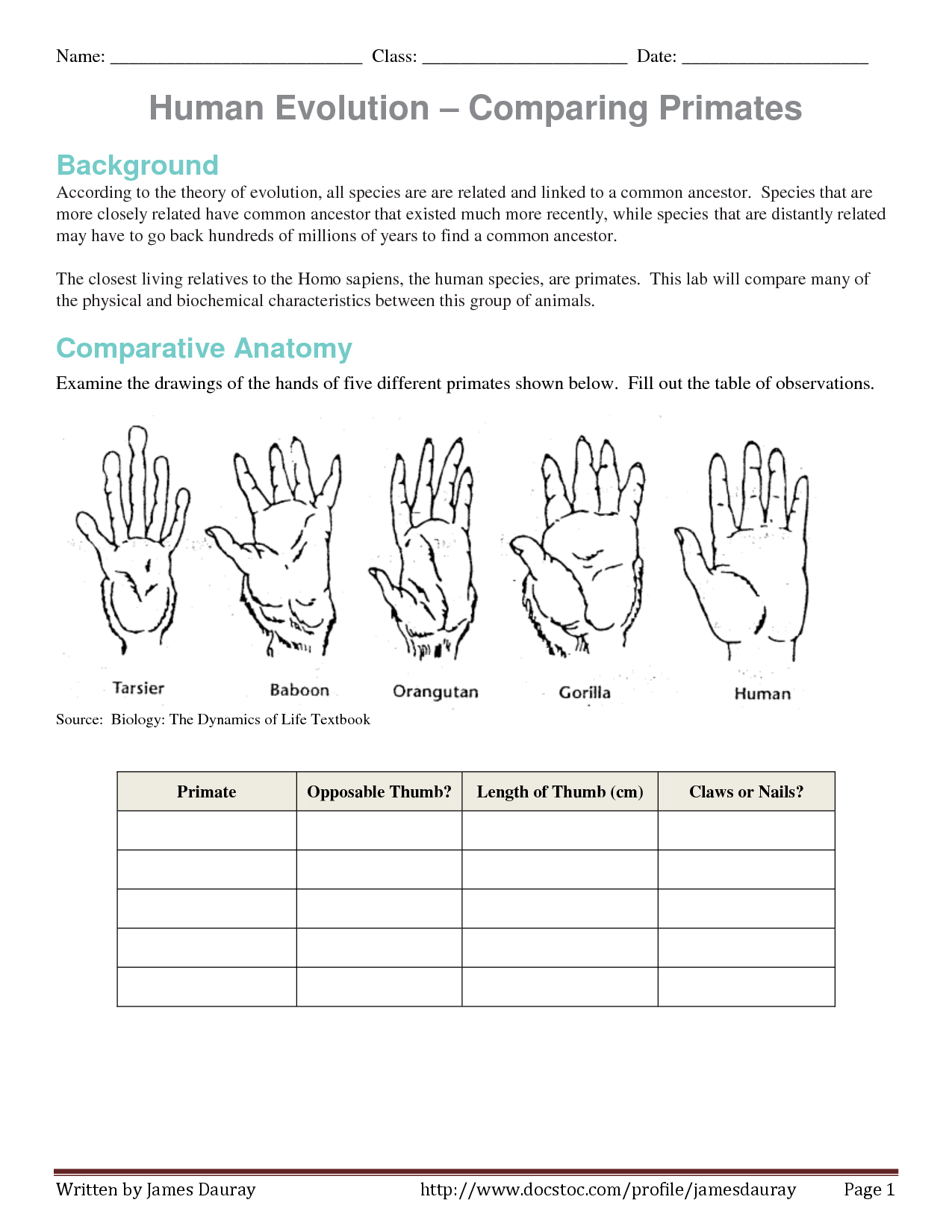 Evolution Of Human Thumb Evidence Of Human Evolution Worksheet