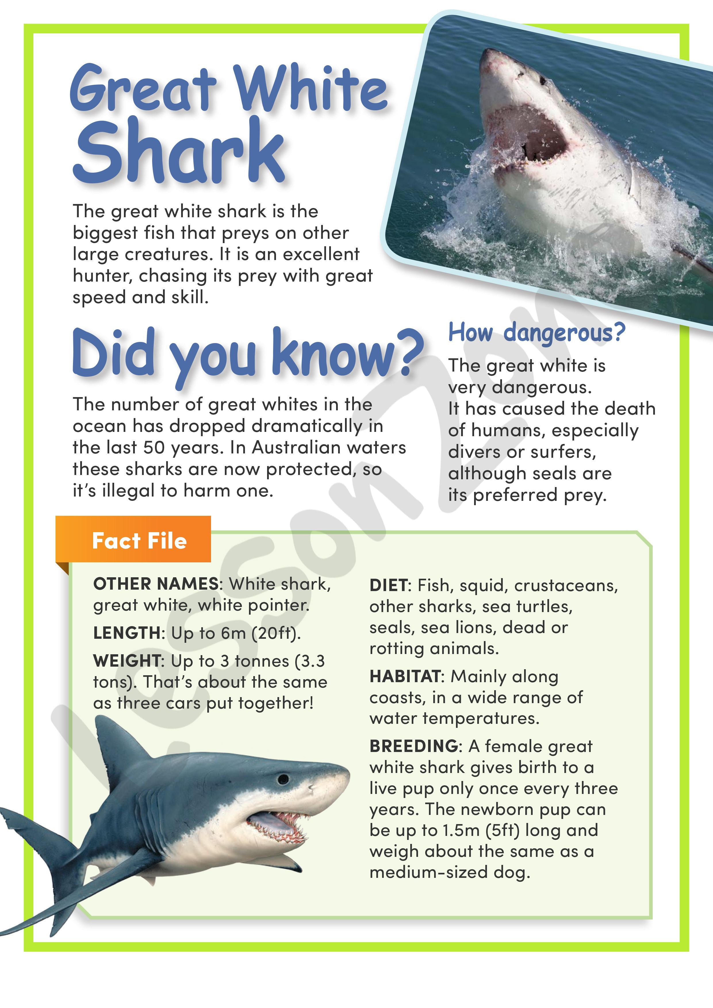 This Article Great White Shark Provides Information