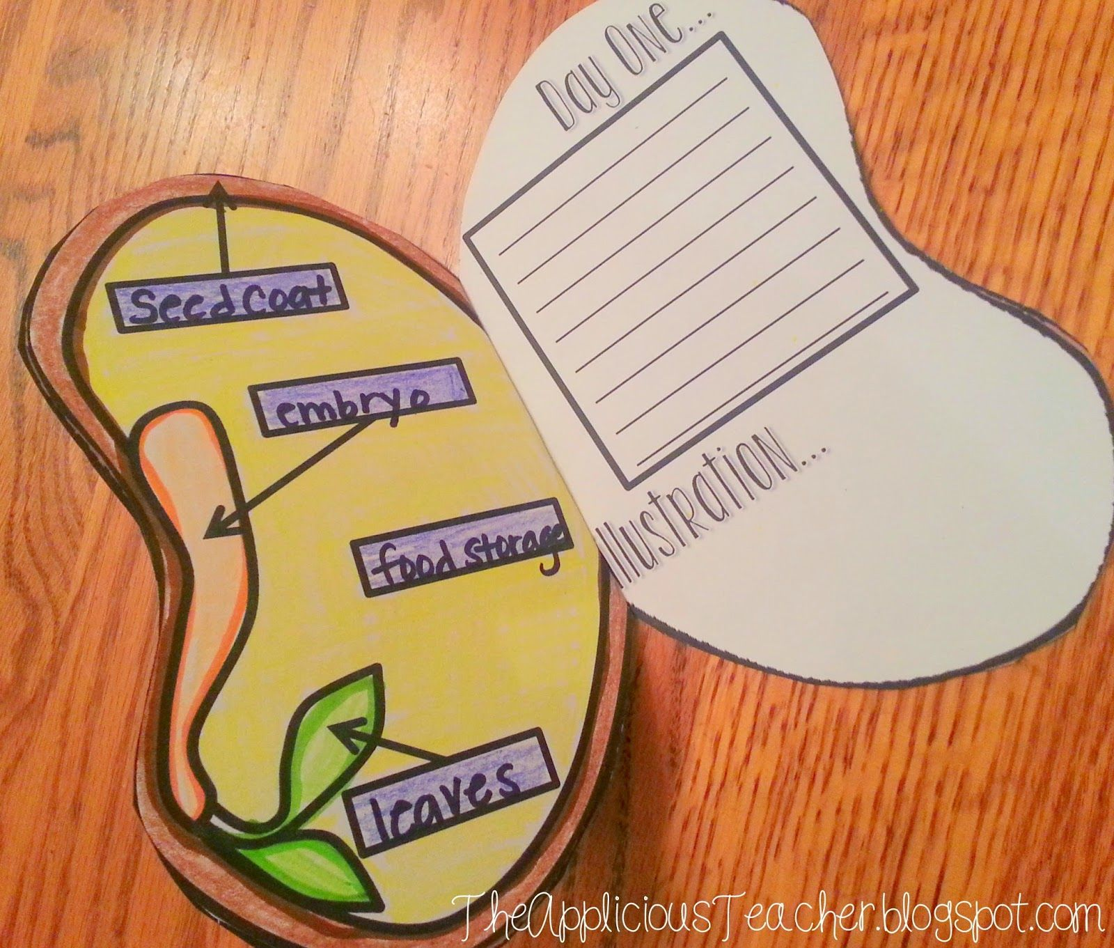 Interactive Seed Journals So Students Can Record Their Data As They Grow A Seed