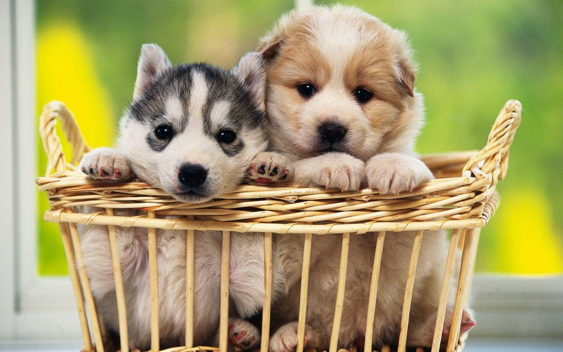 pinhalo media on dog lovers | pinterest | wallpaper