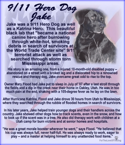 Image result for 9/11 dogs, Jake, 9/11, dogs of 9/11