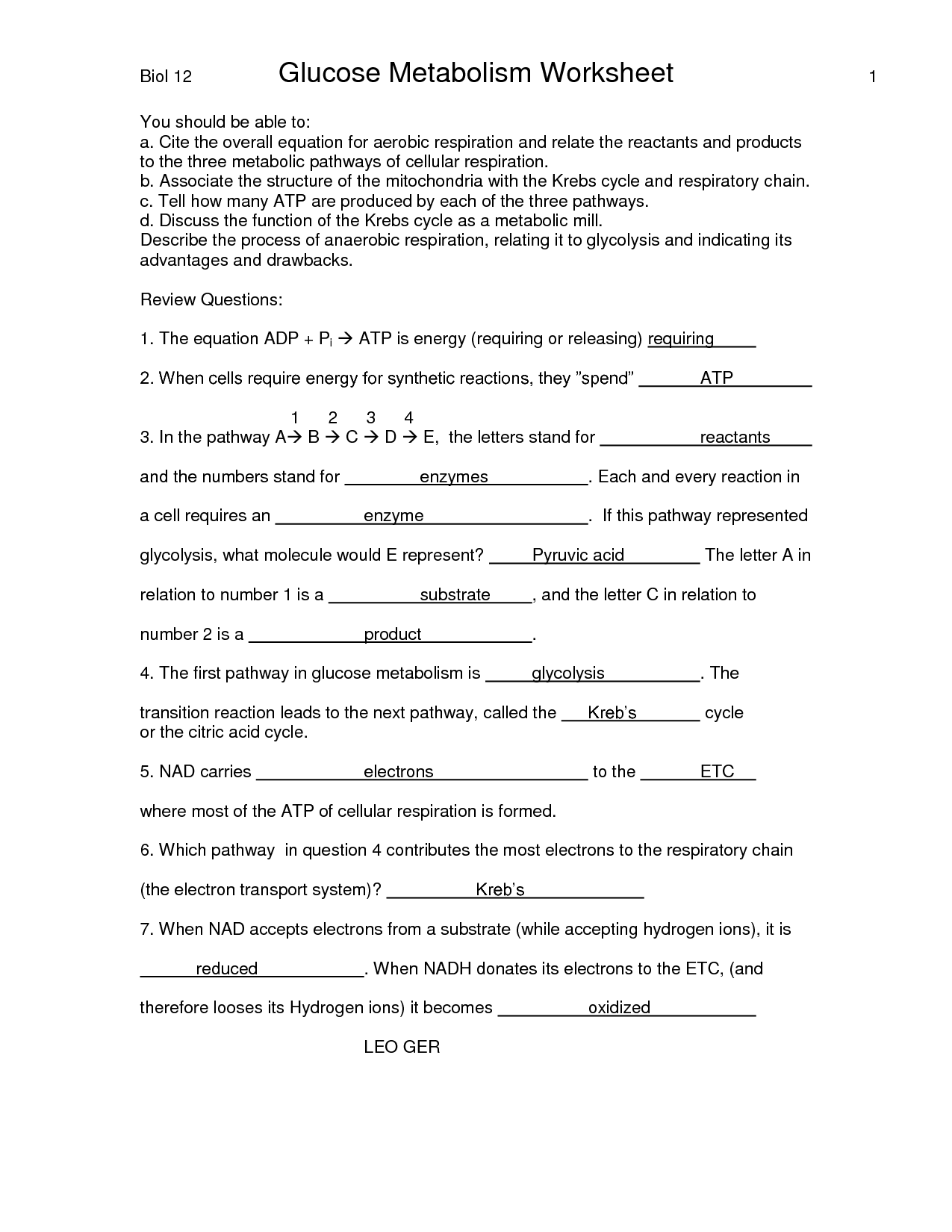 Chapter 8 Cellular Respiration Worksheet And Answers