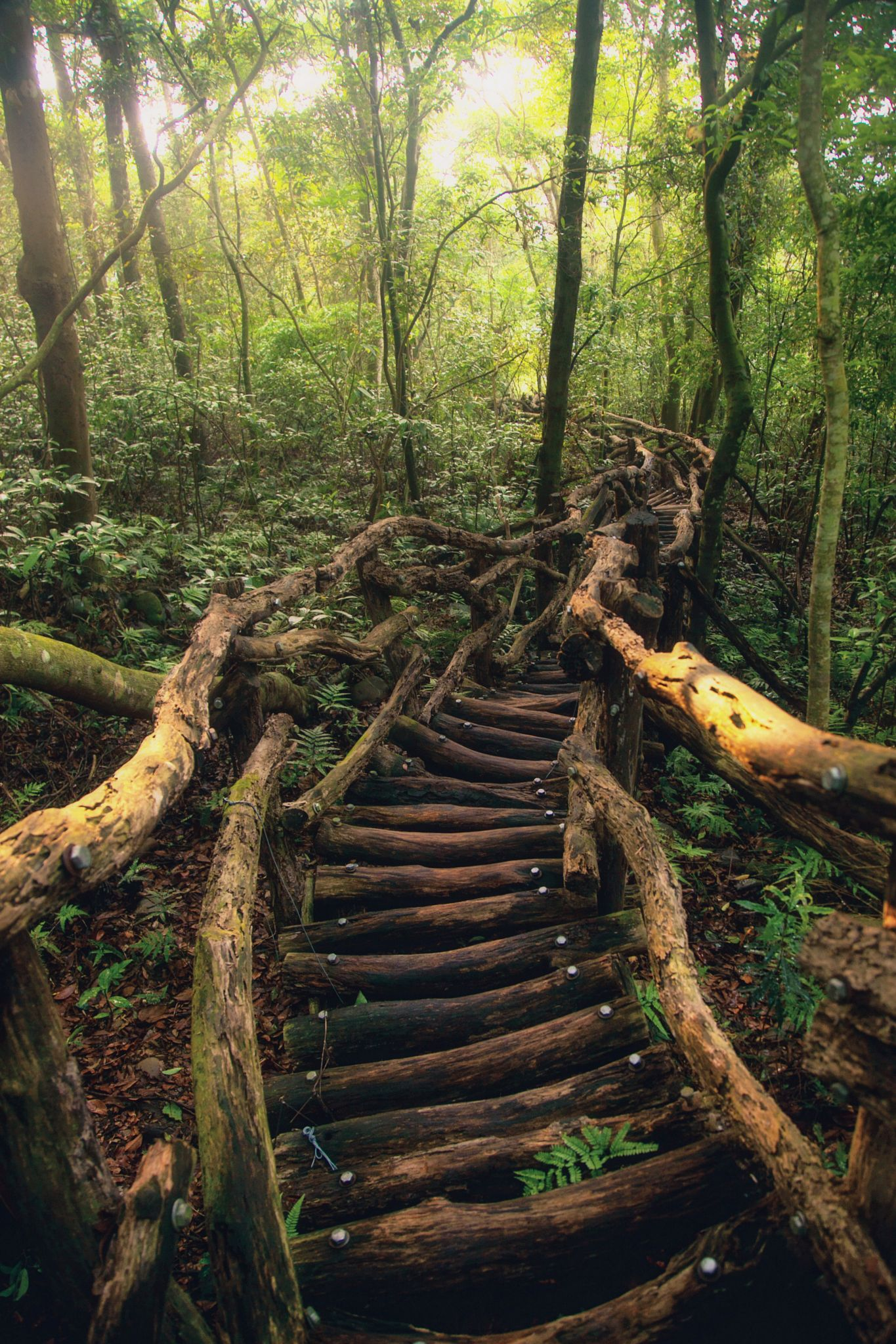a path to the fairy talehanson mao on 500px | nature