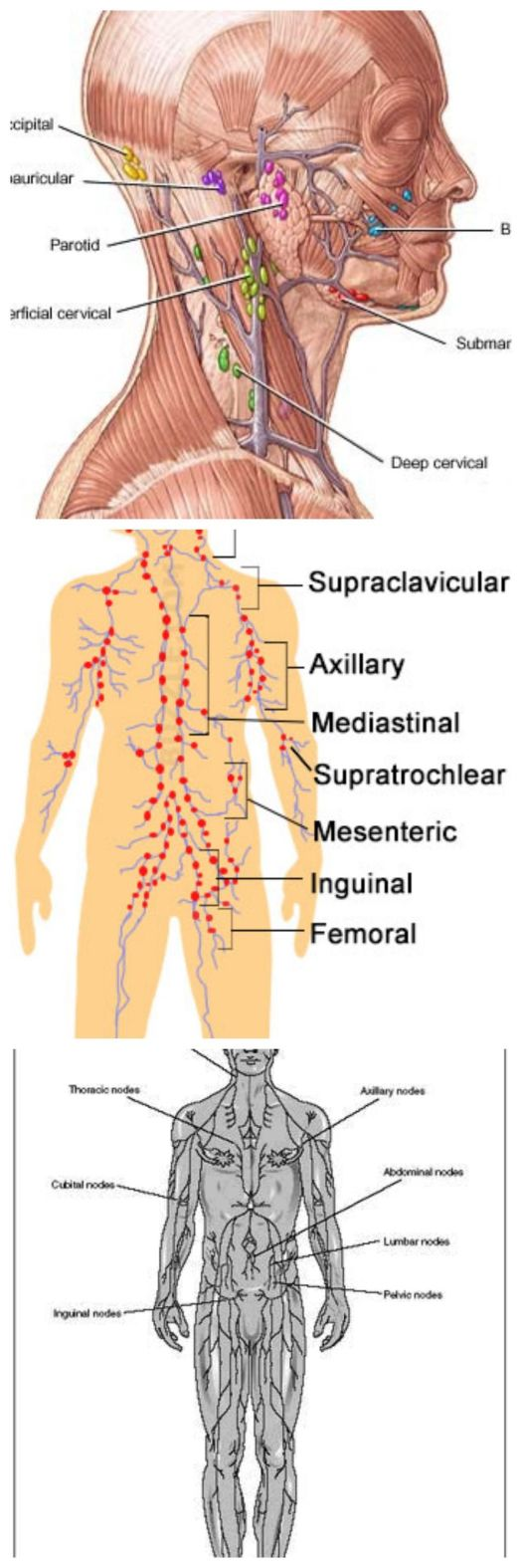 Label the diagram location of major lymph nodes head neck and lymph nodes location pictures types significance pooptronica