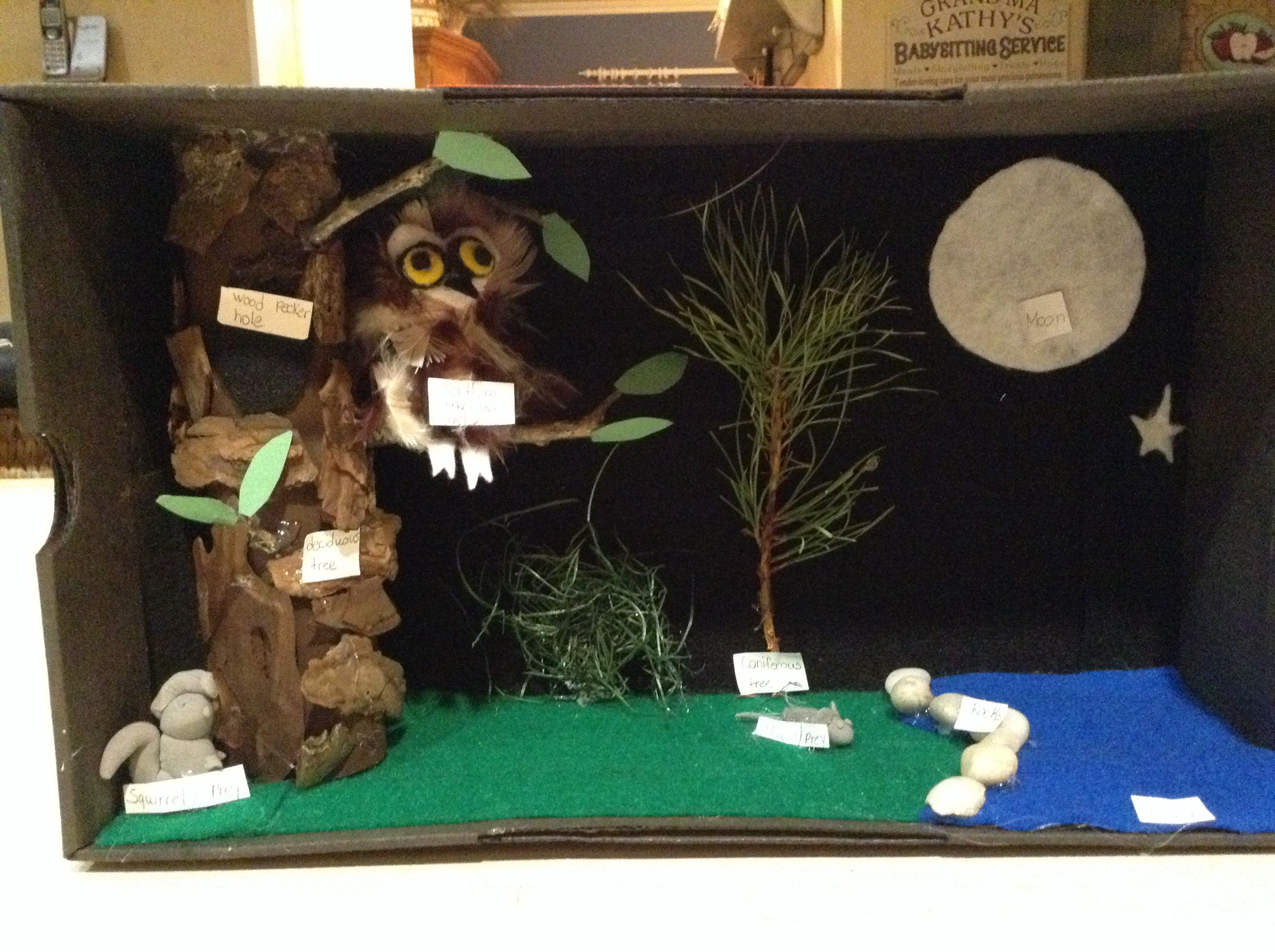 Northern Saw Whet Owl Diorama