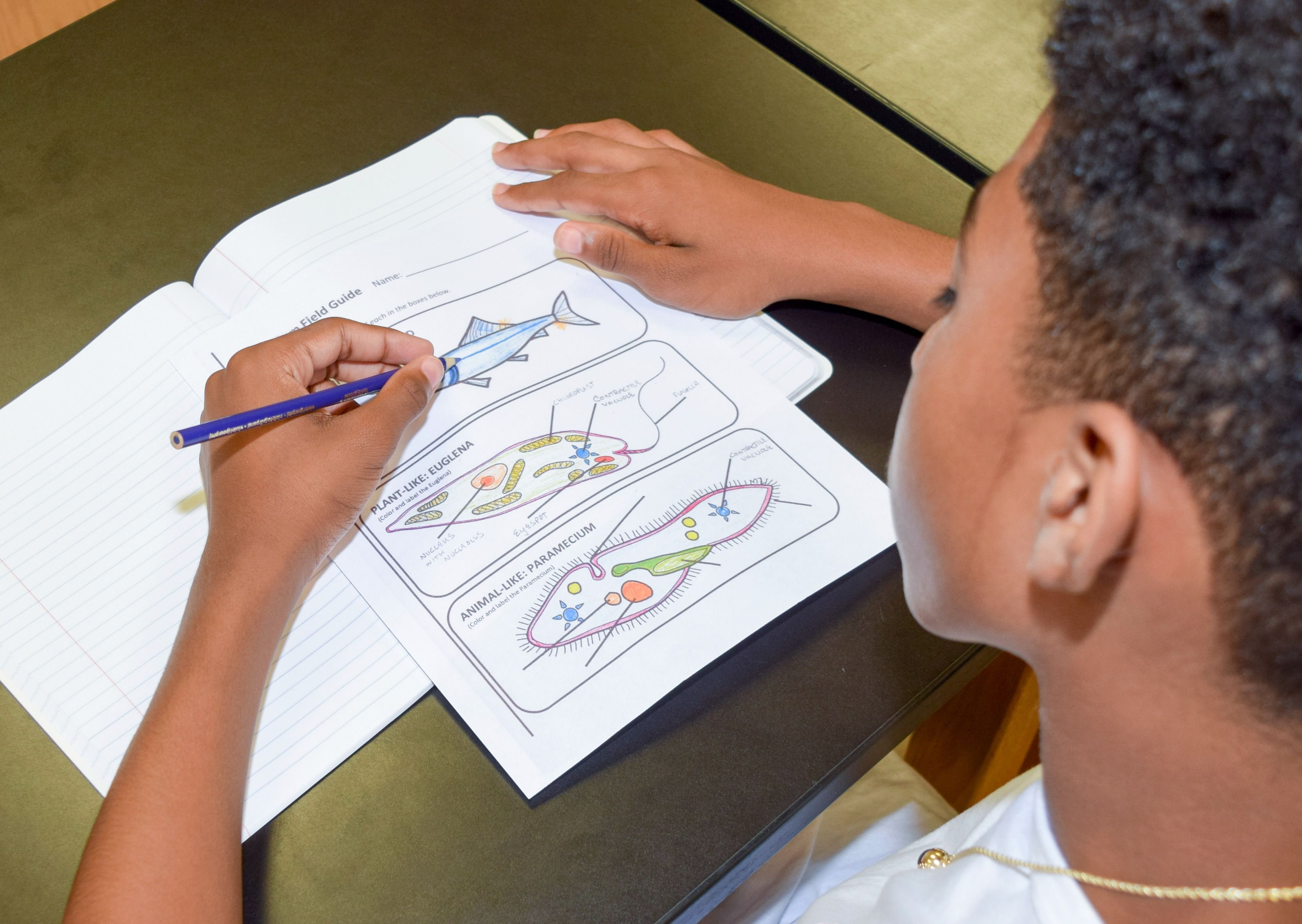 Coloring And Labeling Protists