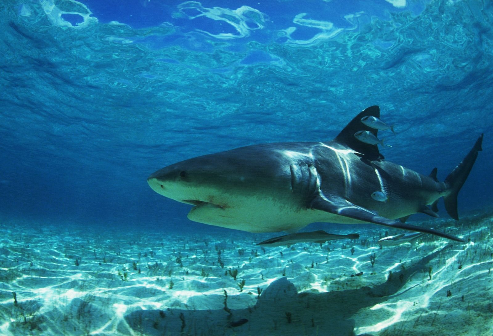 shark pics in high resolution | best sharks and killer whales