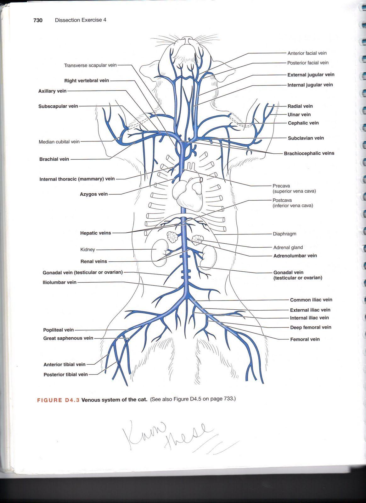 Cat Arteries Quiz