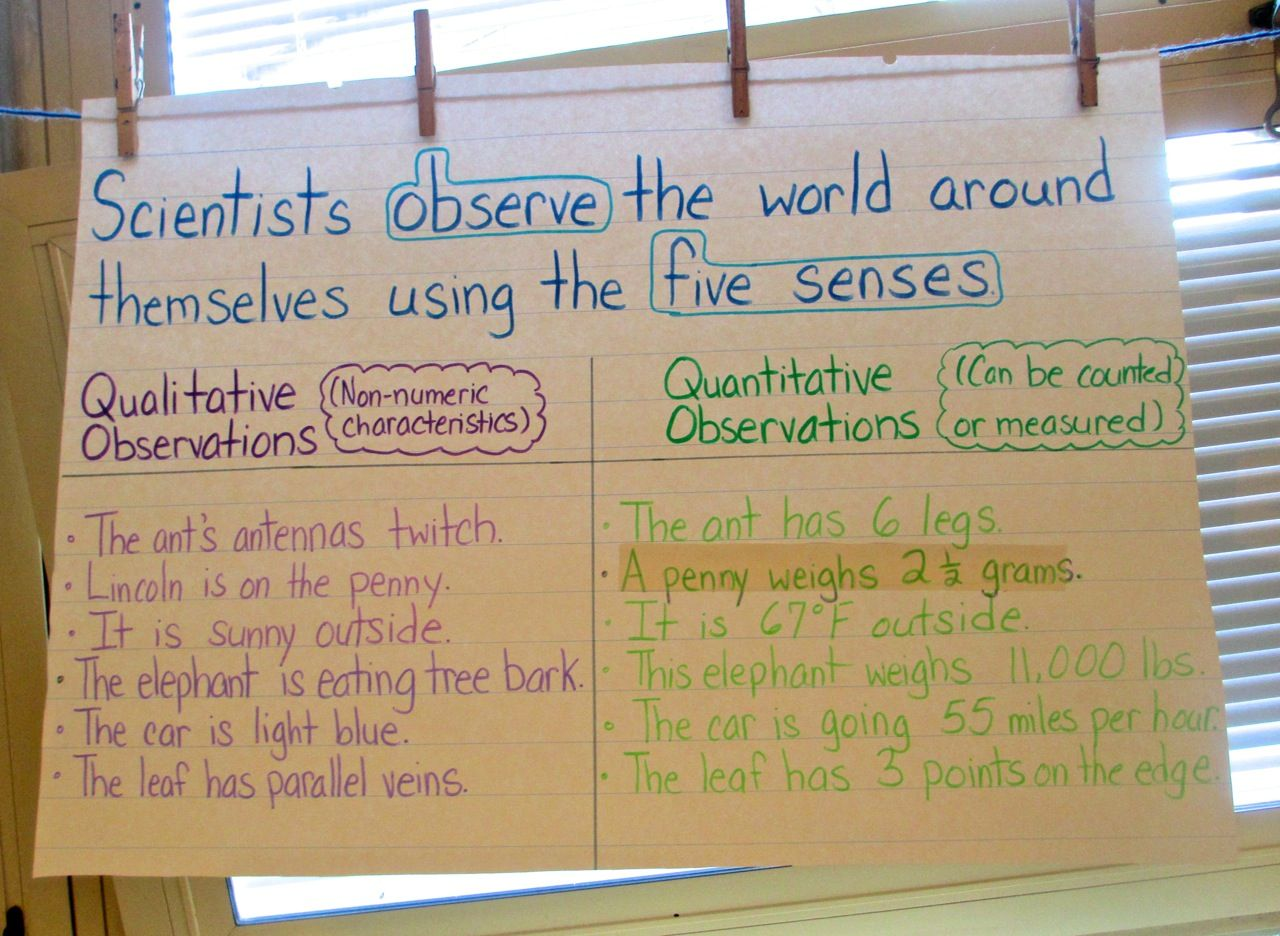 Mystery Bags To Develop Observation And Inference Skills Here S An Easy To Teach Science