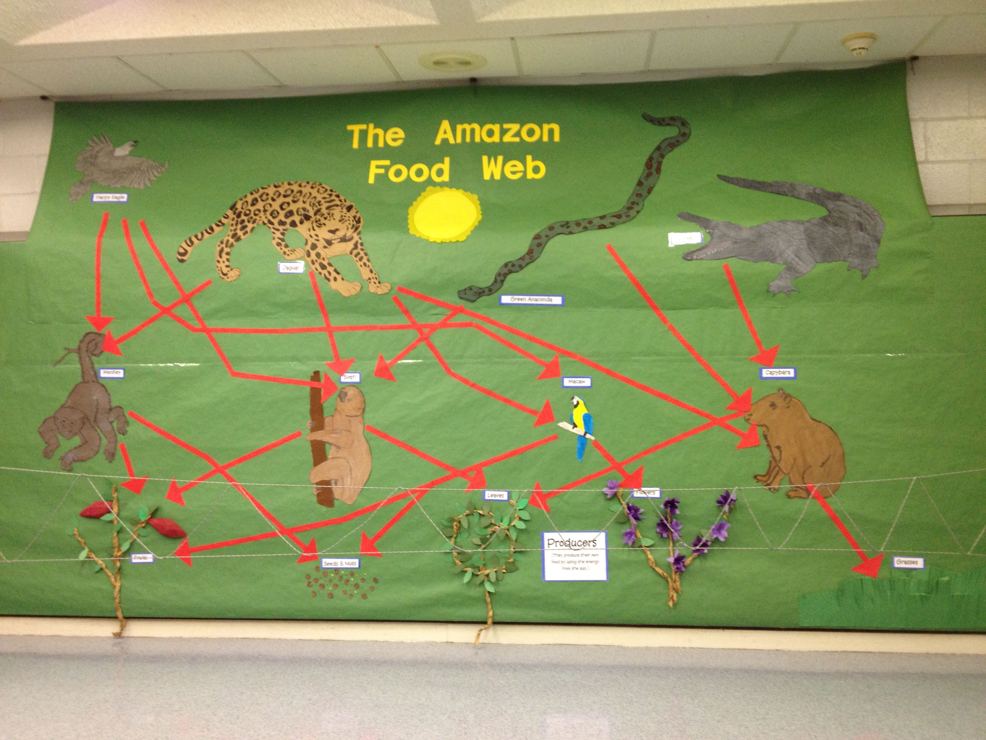Amazon Rainforest Displaying The Food Web Part Of A
