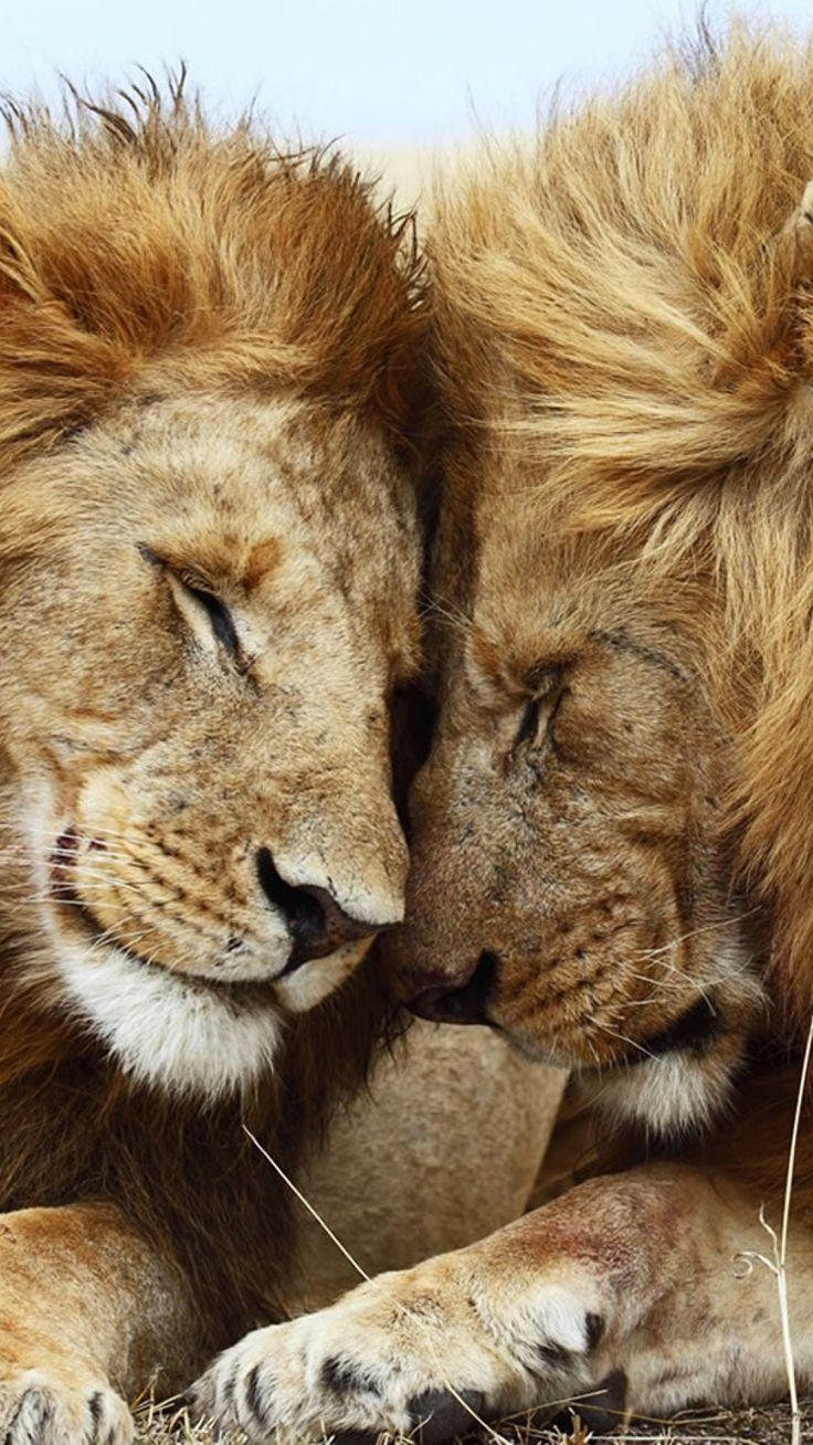 bestgardengadgets   animal crackers   pinterest   lions and animal