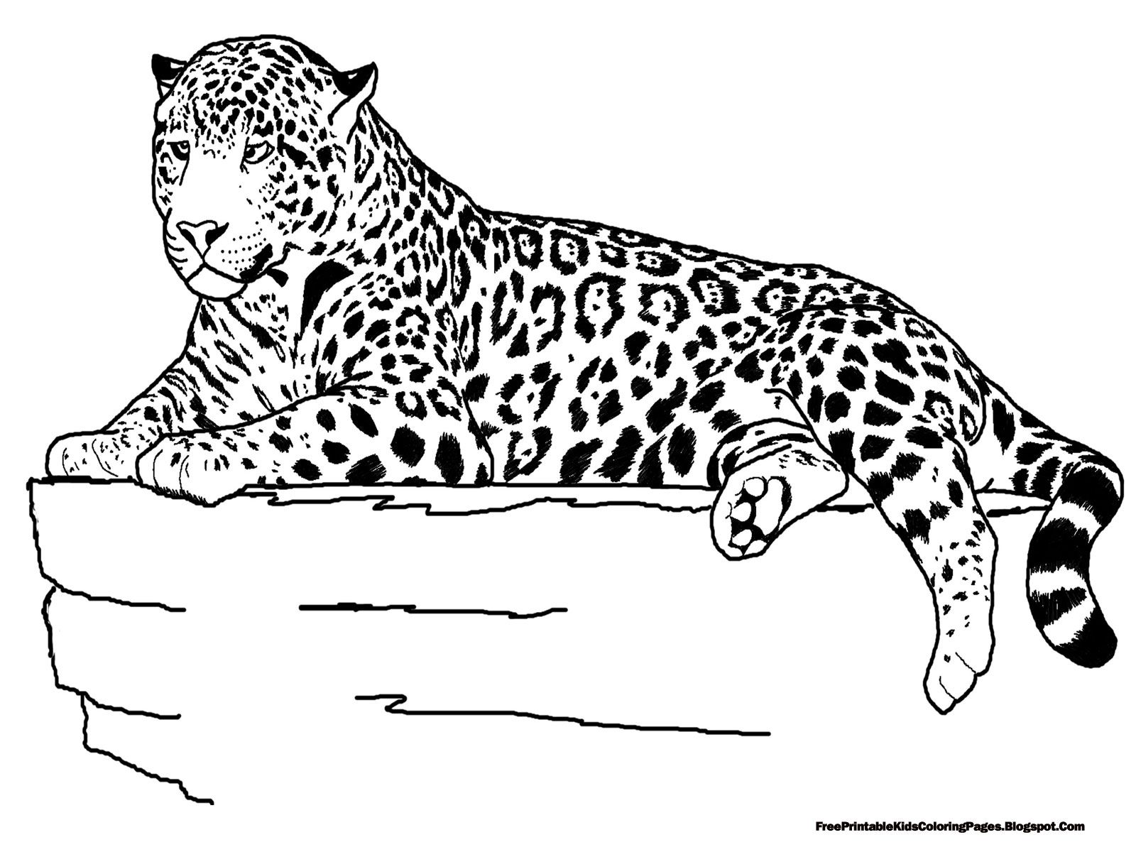 Jaguar Laying Coloring Pages 1600×1200 Teacher Ideas