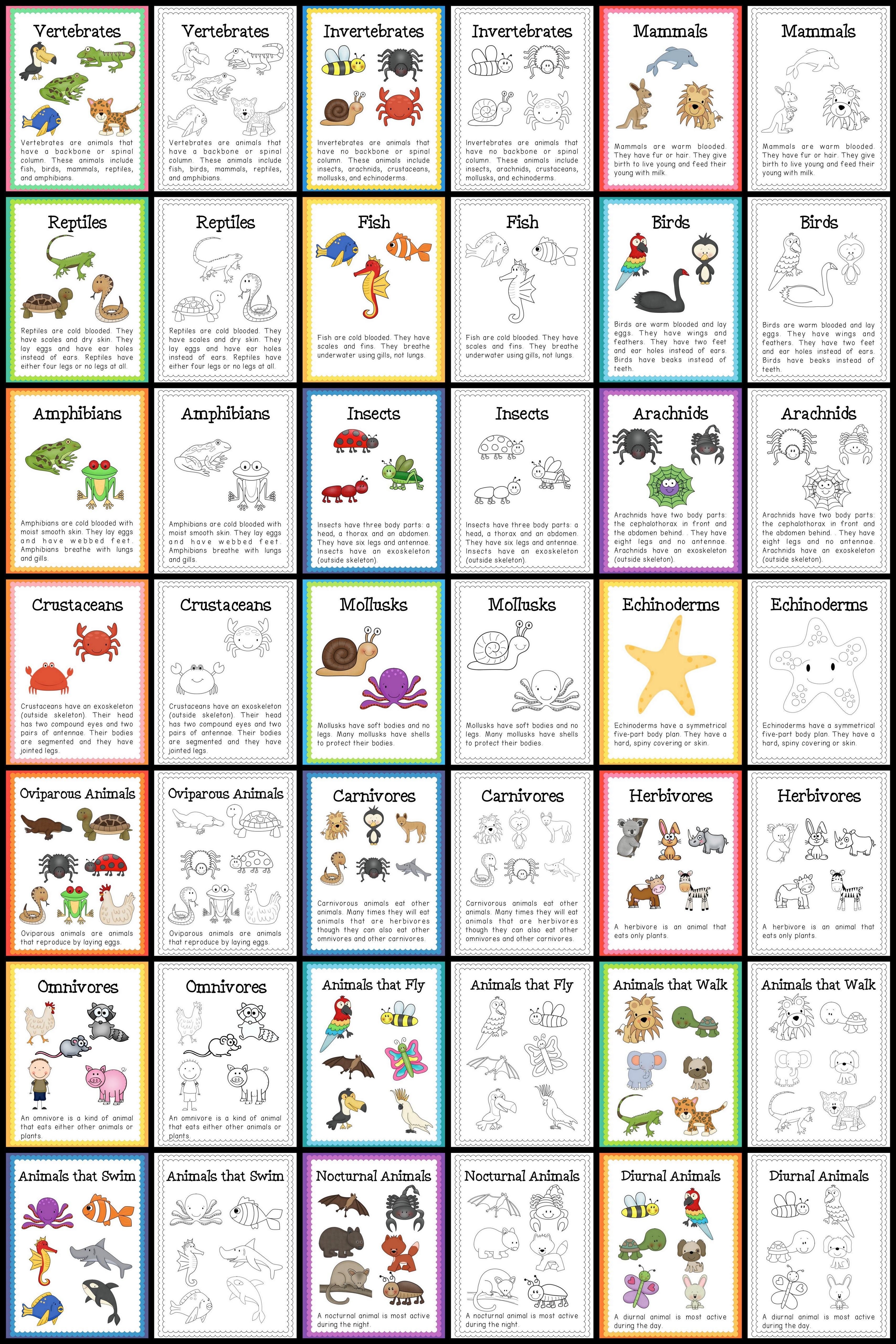Animal Classification Amp Life Cycles Science Bundle
