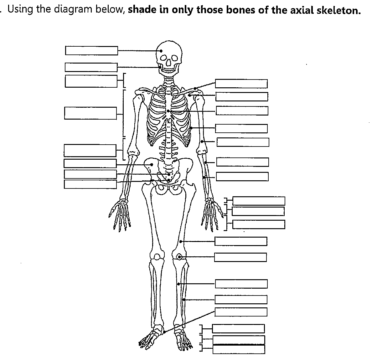 Axial Skeleton Worksheet Fill In The Blank