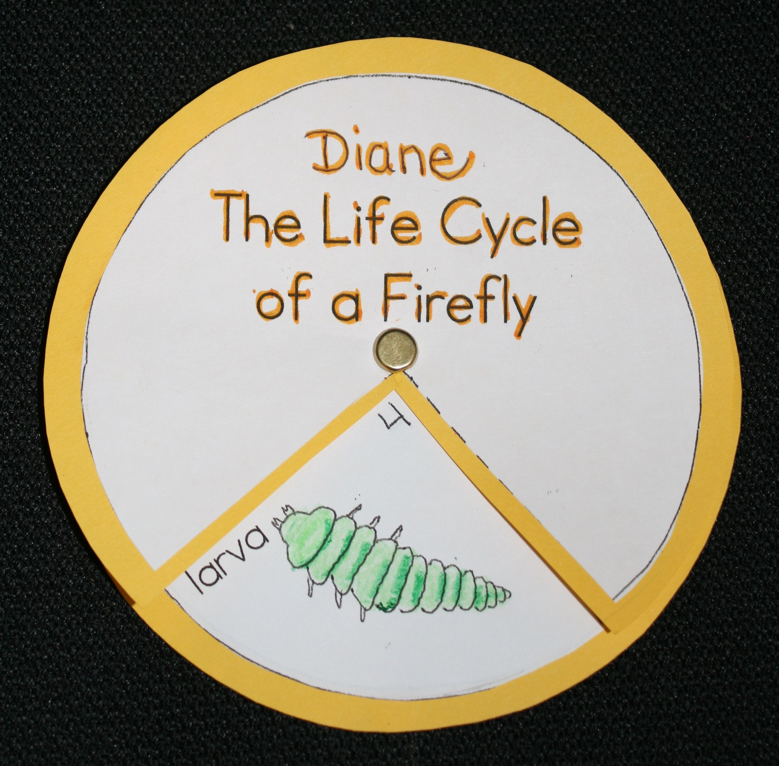 Life Cycle Of A Firefly Firefly Life Cycle Wheel Firefly