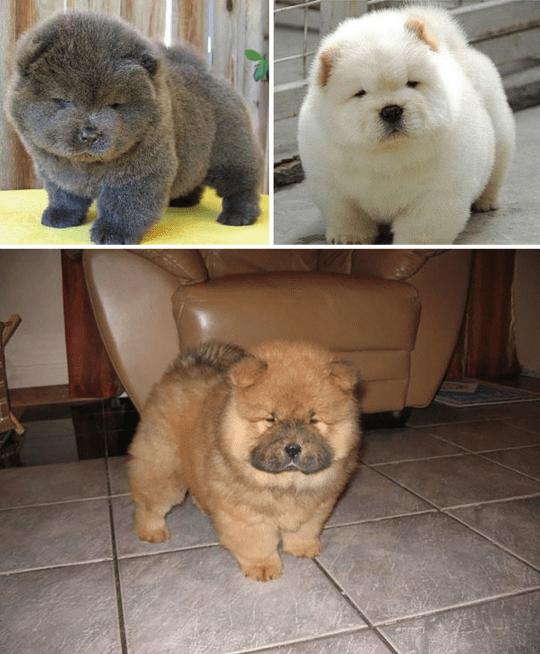 Popular Look Alike Chubby Adorable Dog - a7cd48e41e91df0958f153f43d0f67c9  2018_104270  .png?resize\u003d540%2C654\u0026ssl\u003d1