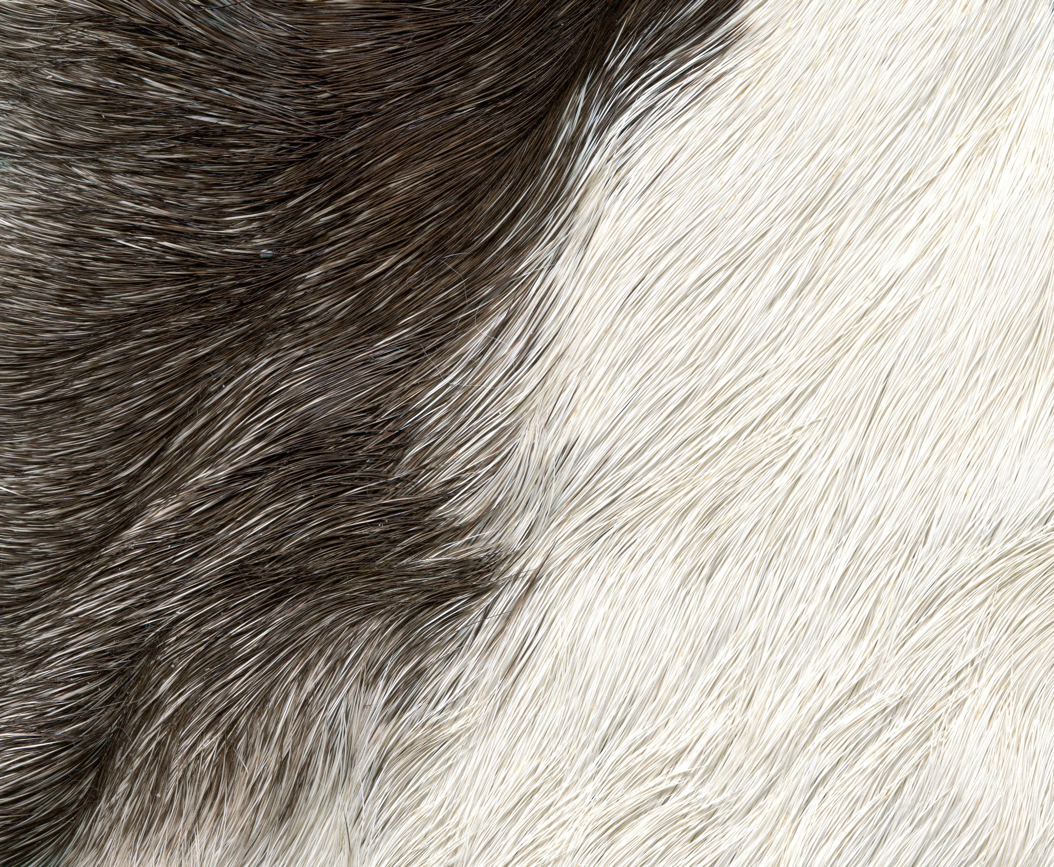 Fur Texture Freebies