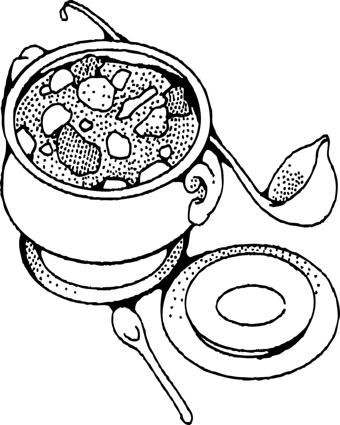 Vegetable Soup Coloring Pages