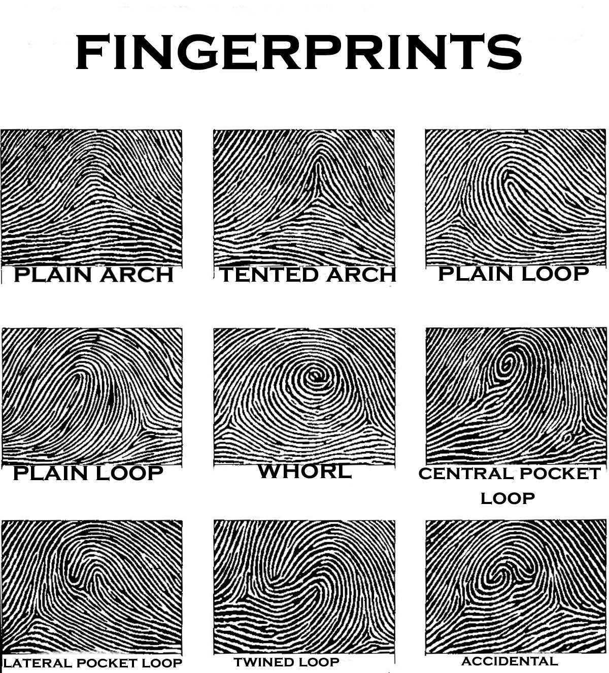Fingerprints Offer An Infallible Means Of Personal