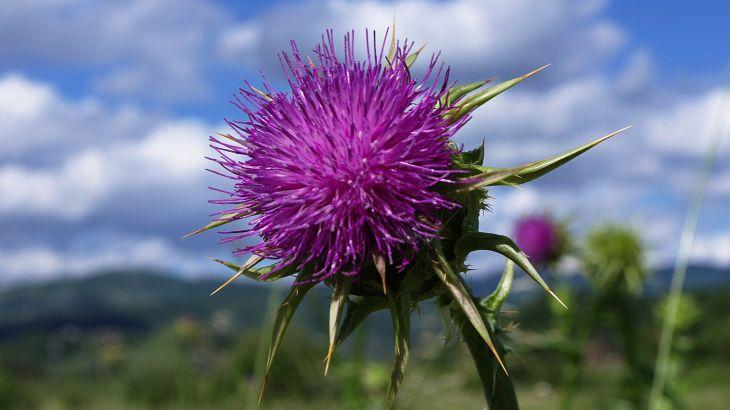 HD Widescreen flower pic    ololoshenka
