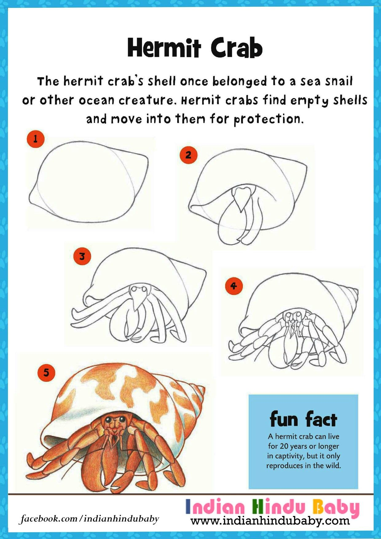 Hermit Crab Can Lives For 20 Years Or Longer Teach Your