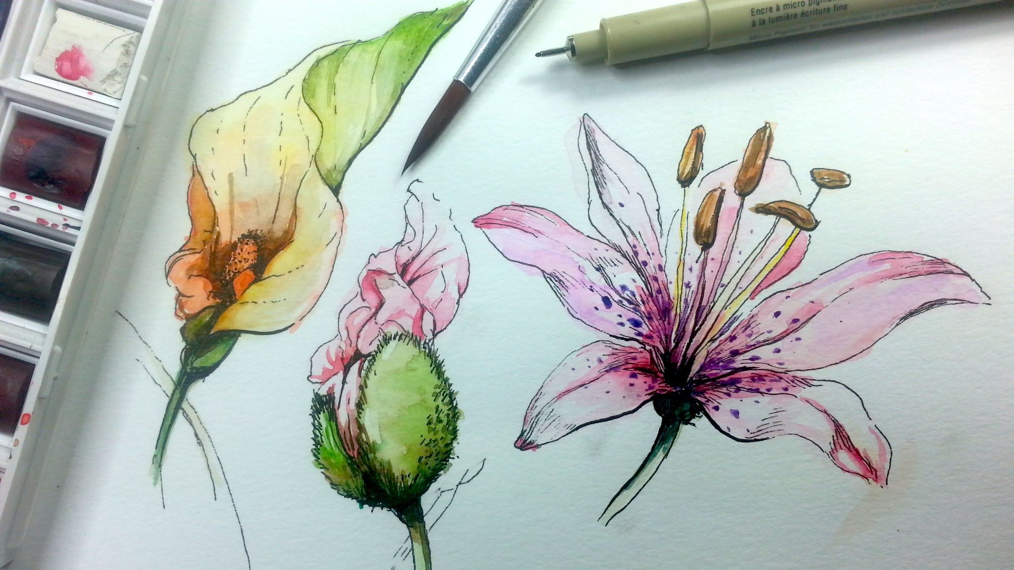How To Draw And Paint Flowers With Pen And Ink And