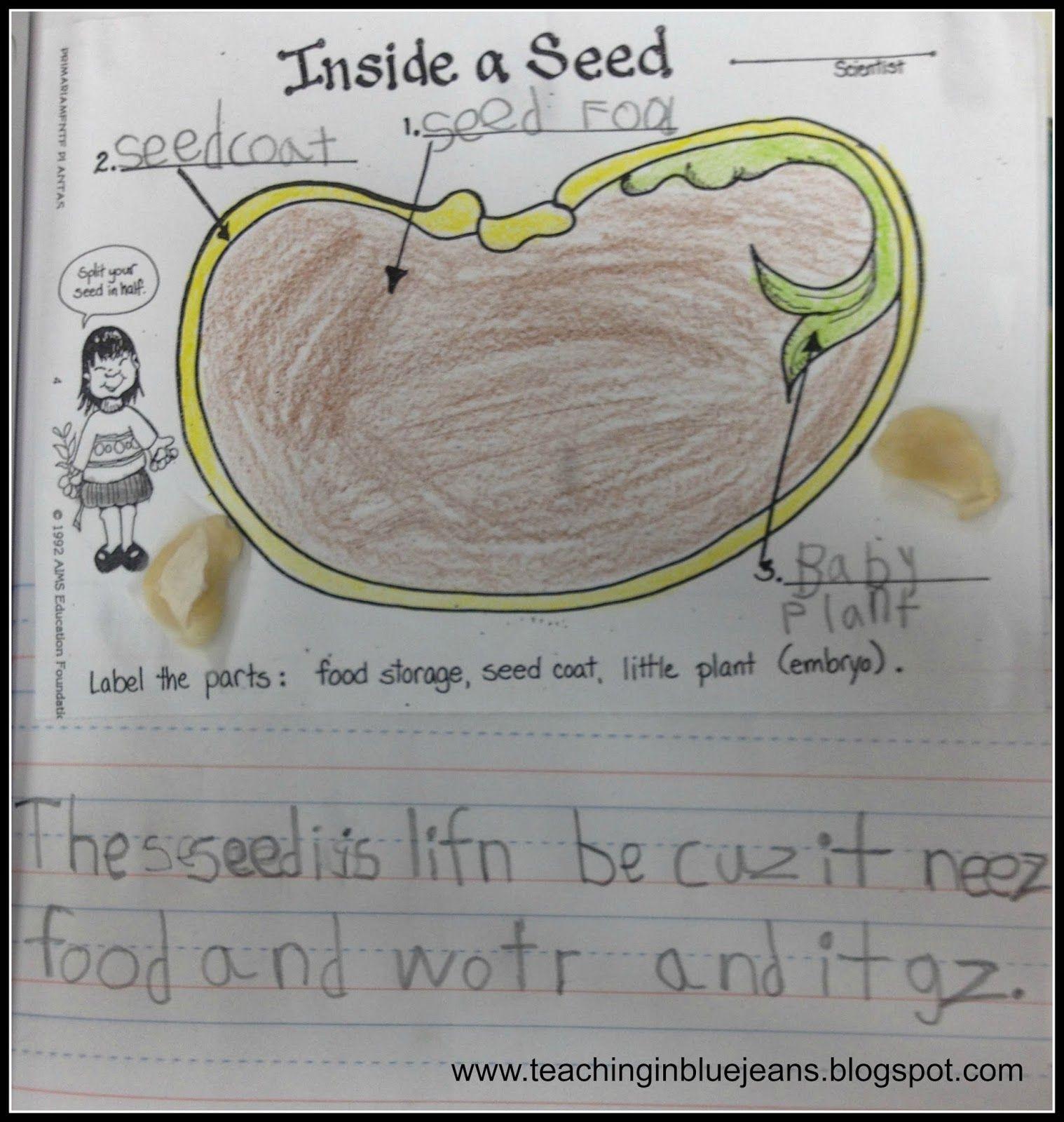 Fun With Seeds In Kindergarten Hands On Seed Activities