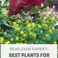 Heirloom Expert Best Plants for Garden Shade Organic gardening