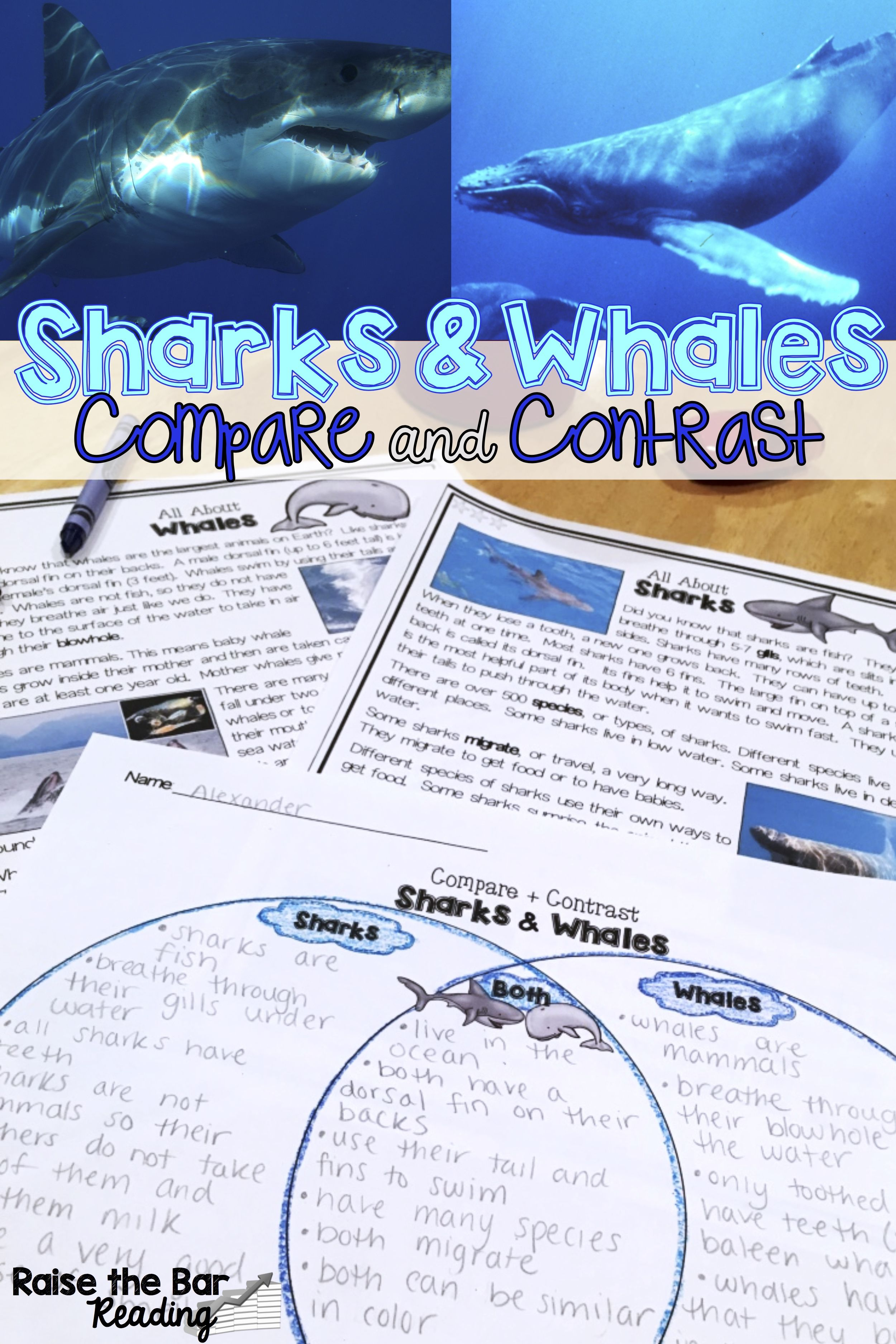 Whales And Sharks Compare And Contrast Differentiated Reading Passages