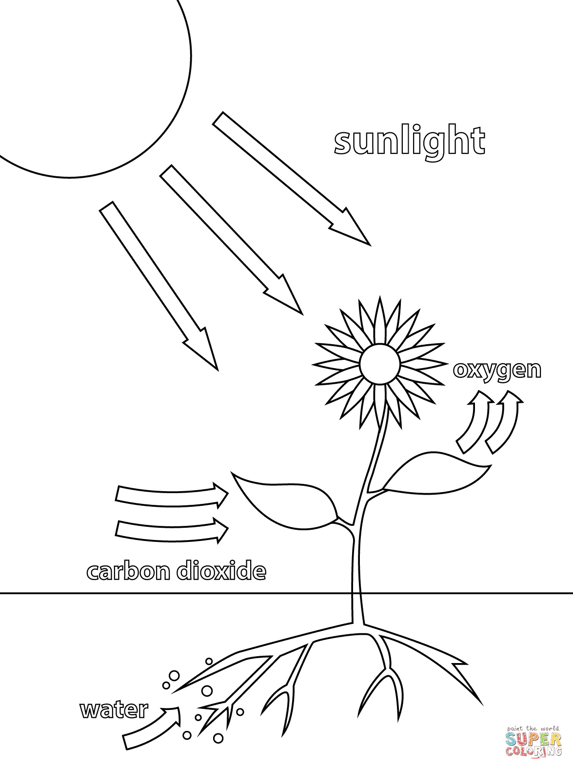 Photosynthesis Coloring Pages
