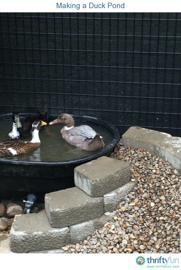 Making A Duck Pond Super Easy Pond And Faucet