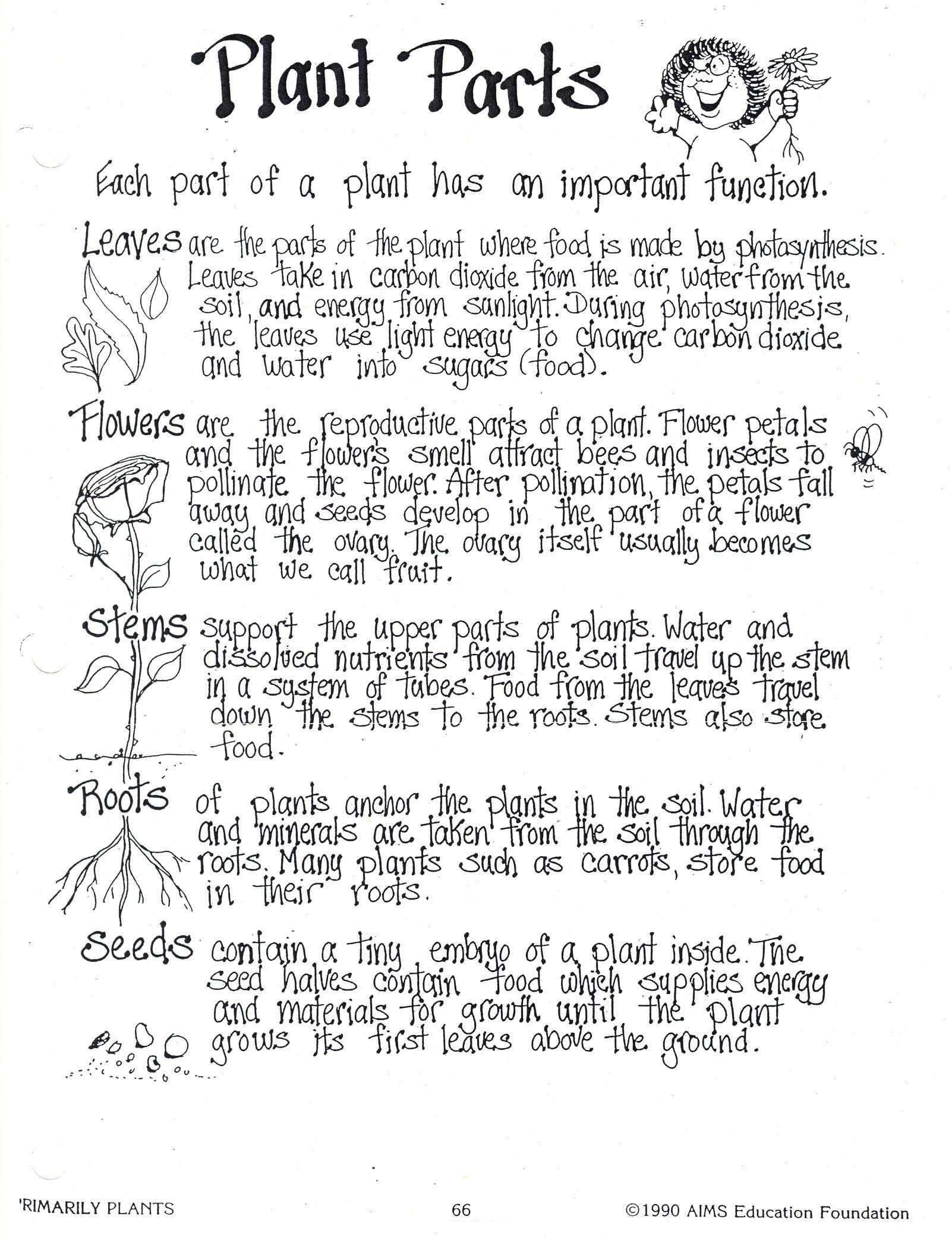 Worksheet Parts Of Plants Worksheet Grass Fedjp