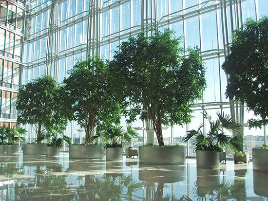 beautiful large ficus trees make this modern lobby more on hole in the wall cap oriental id=51175